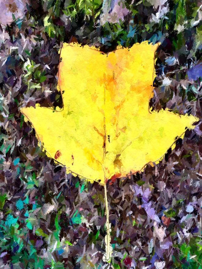 cemetary-leaf