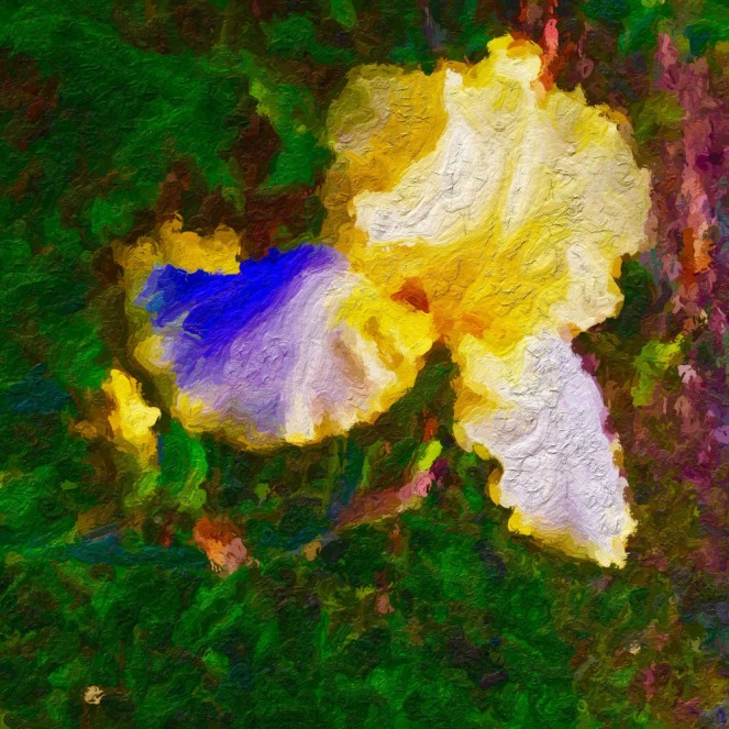 october-iris