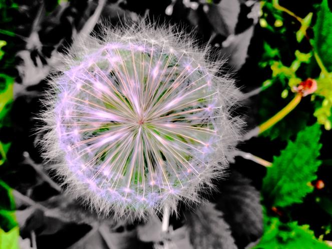 star-seed