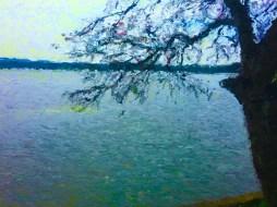 tree-water