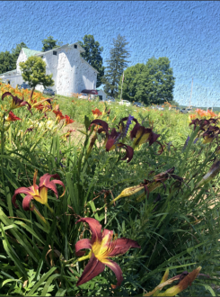 Daylilie Farm