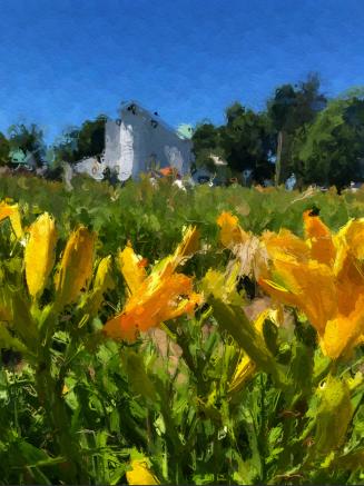 Gold Lilie Farm